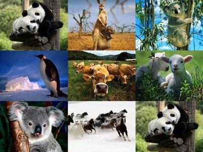 Разнообразные животные.