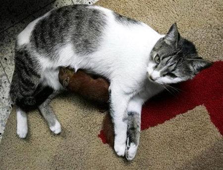 В Колумбии кошка усыновила бельчонка.