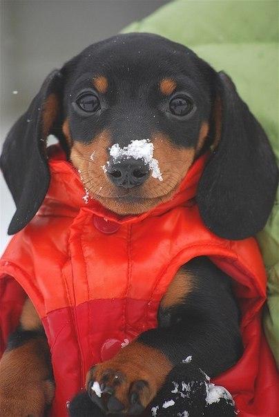 Спорим никогда не угадаете породу этой собаки?