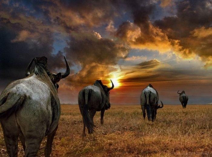 Африка. часть 3